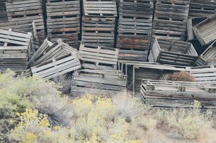 Pile of old and discarded wooden fruit crates, boxes for apple harvestの写真素材 [FYI02257368]