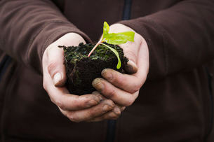 Close up of human hands holding a seedling with one leaf ready for planting.の写真素材 [FYI02257608]
