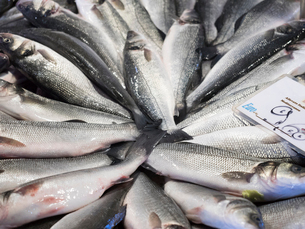 Close up of a market stall and fresh produce. Fresh fish, catch of the day and a price label.の写真素材 [FYI02257728]
