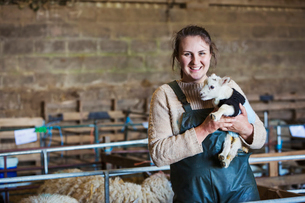 Woman standing in a barn, holding a newborn lamb dressed in a knitted jumper.の写真素材 [FYI02257739]