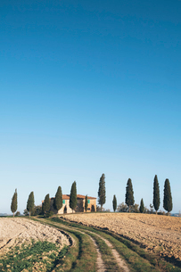 View across fields of a traditional farmhouse in a grove of cypress trees.の写真素材 [FYI02257817]