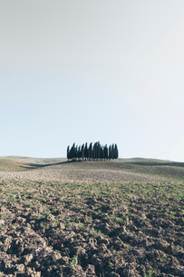 A Tuscan landscape, ploughed fields and view to a small rise and a grove of cypress trees.の写真素材 [FYI02257839]