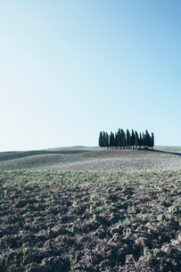 A Tuscan landscape, ploughed fields and view to a small rise and a grove of cypress trees.の写真素材 [FYI02257855]