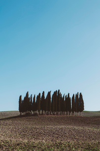 A Tuscan landscape, ploughed fields and view to a small rise and a grove of cypress trees.の写真素材 [FYI02257866]