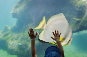 A child visiting an aquarium placing his hands on a large glass wall into a pool with marine life anの写真素材 [FYI02258237]