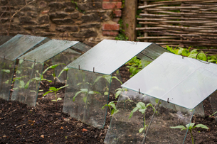 Close up of perspex cold frames protecting seedlings in a plant bed.の写真素材 [FYI02258313]