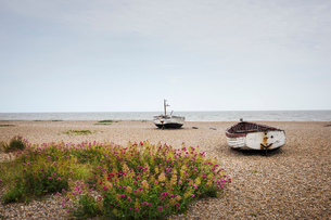 Red Valerian growing on beach, fishing boats lying mid distance.の写真素材 [FYI02258505]
