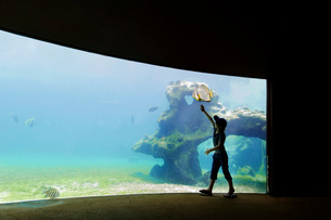 A child visiting an aquarium, by a large glass wall into a pool with marine life.の写真素材 [FYI02258563]