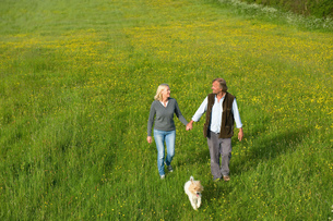 High angle view of man and woman walking hand in hand across a meadow, small dog running beside themの写真素材 [FYI02258668]
