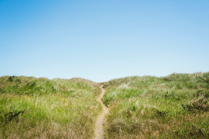 Landscape with a footpath winding through sand dunes and grass under a clear blue sky.の写真素材 [FYI02258719]