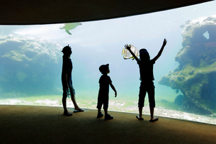Three children, boys in a row standing by a glass wall in an aquarium with a view into a tank of watの写真素材 [FYI02258776]