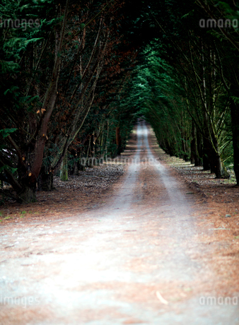 View along a tree lined country road.の写真素材 [FYI02258802]