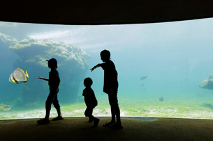Three children, boys of varied ages, standing in an aquarium by a glass wall and view into a pool wiの写真素材 [FYI02258839]