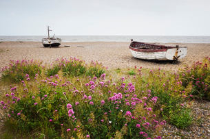 Red Valerian growing on beach, fishing boats lying mid distance.の写真素材 [FYI02258892]