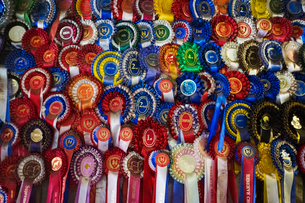 Full frame close up of a large display of winning rosettes, competition awards in various colours. Sの写真素材 [FYI02258970]