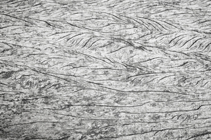 Full frame close up of textured grey weathered wood.の写真素材 [FYI02259295]