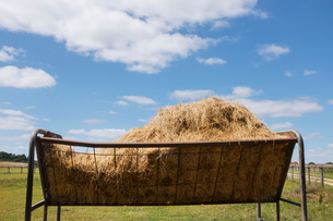 A metal animal feed trough or cattle feeder full of hay on a pasture under cloudy sky.の写真素材 [FYI02259317]
