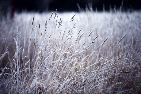 Surface view across a field of grass.の写真素材 [FYI02259455]