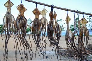 Close up of freshly caught squid, hanging up to dry on a pole on a beach.の写真素材 [FYI02259867]