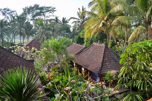 High angle view of traditional buildings among palm trees, Bali Islandの写真素材 [FYI02260030]