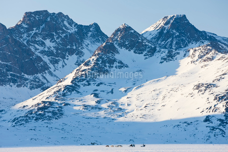Winter landscape with snow covered mountain and a pack of Huskies pulling a sledge in the distance.の写真素材 [FYI02260168]