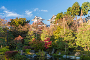 Landscaped garden in autumn with trees, pond and pagodas in background.の写真素材 [FYI02260202]