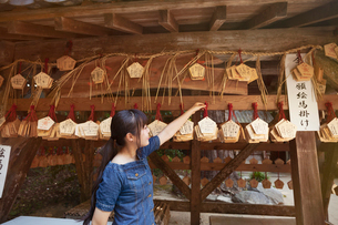 Young woman wearing blue dress looking at wooden fortune telling plaques at Shinto Sakurai Shrine, Fの写真素材 [FYI02260277]