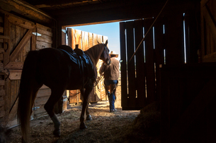 Rear view of cowboy leading saddled horse out of stable.の写真素材 [FYI02260308]
