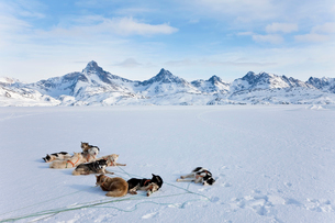 Winter landscape with pack of Huskies resting on the ice.の写真素材 [FYI02260335]