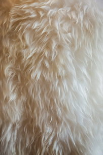 Close up of fine sheepskin or animal wool rug.の写真素材 [FYI02260376]