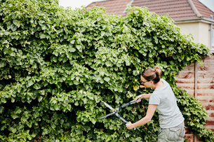 A woman using shears to cut back a climbing plant growing up over a fence.の写真素材 [FYI02260497]