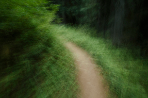 Blurred abstract of hiking trail through lush, green forest in Okanogan County, Washington.の写真素材 [FYI02260765]