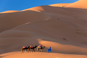 Tuareg man leading camel train through the Sahara desert.の写真素材 [FYI02260805]