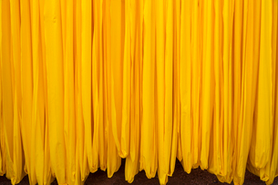 Close up of freshly dyed bright yellow fabric hanging up to dry.の写真素材 [FYI02260830]