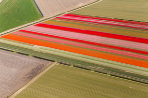 Aerial view of rows of colourful fields of tulips.の写真素材 [FYI02260901]