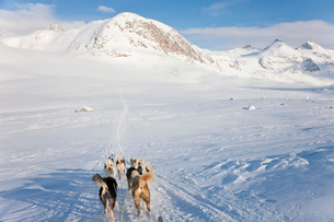 Winter landscape with pack of Huskies pulling a sledge.の写真素材 [FYI02260965]