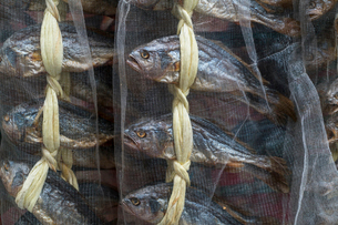 Close up of dried fish at a fish market.の写真素材 [FYI02261168]