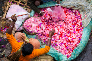 High angle view of vendor selling pink flower petals at a street market.の写真素材 [FYI02261277]