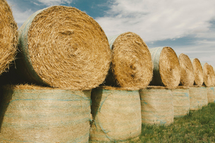 Wrapped round stacked hay bales on the prairie at harvest time in Montana.の写真素材 [FYI02261306]