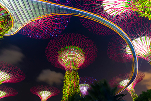 Low angle view of illuminated Supertree Grove at Gardens by the Bay, Singapore at night.の写真素材 [FYI02261541]