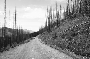 Road through fire damaged forest from extensive wildfire, near Harts Pass, Pasayten Wilderness, Washの写真素材 [FYI02261566]