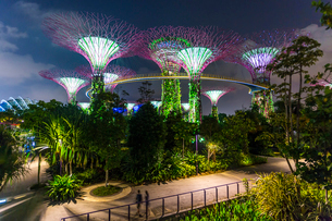 Night view with illuminated Supertree Grove at Gardens by the Bay, Singapore.の写真素材 [FYI02261581]