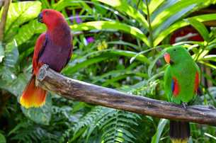 Close up of red and green parrots perched on tree branch, Bali Island.の写真素材 [FYI02261671]