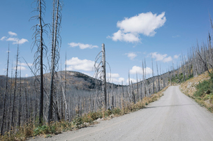 Road through fire damaged forest from extensive wildfire, near Harts Pass, Pasayten Wilderness, Washの写真素材 [FYI02261722]