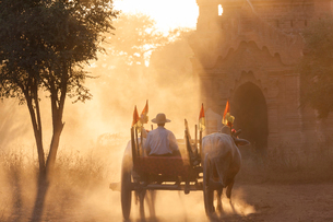 Rear view of man on ox cart driving past pagoda at sunset.の写真素材 [FYI02261736]