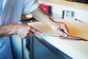 Close up of chef working at a counter at a Japanese sushi restaurant, slicing octopus tentacle.の写真素材 [FYI02261788]