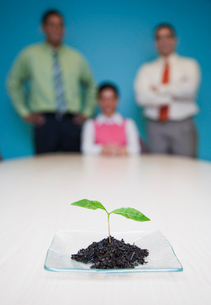 Team of three business people standing at a table looking at a single plant seedling, a business metの写真素材 [FYI02262145]