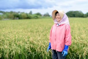 Smiling woman wearing straw hat and pink jacket and blue rubber gloves standing in a rice field.の写真素材 [FYI02262883]