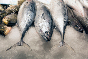 High angle close up of freshly caught tuna fish.の写真素材 [FYI02263344]