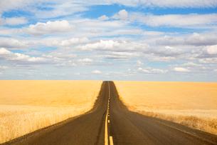 View along rural road running through golden fields under a cloudy sky.の写真素材 [FYI02263472]